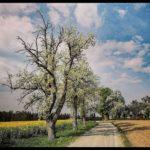 Aprilwochenende-Krenglbach-014