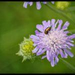 Blueten-und-Erntezeit-Krenglbach-Juli-2020-025