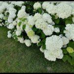 Blueten-und-Erntezeit-Krenglbach-Juli-2020-039