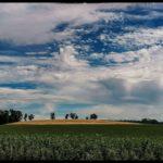 Blueten-und-Erntezeit-Krenglbach-Juli-2020-043