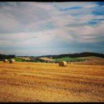 Blueten-und-Erntezeit-Krenglbach-Juli-2020-044