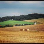 Blueten-und-Erntezeit-Krenglbach-Juli-2020-045