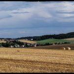 Blueten-und-Erntezeit-Krenglbach-Juli-2020-046