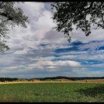 Blueten-und-Erntezeit-Krenglbach-Juli-2020-048
