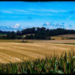 Weizenernte-Krenglbach-Juli-2020-006