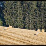 Weizenernte-Krenglbach-Juli-2020-007