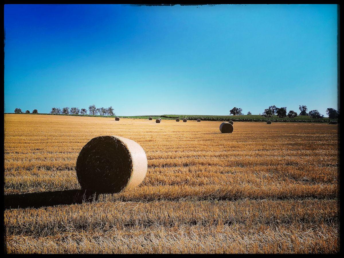 Weizenernte in Krenglbach