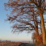 Erster-Frost-Morgen-22-11-2020-001