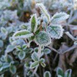 Erster-Frost-Morgen-22-11-2020-009