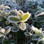Erster-Frost-Morgen-22-11-2020-010