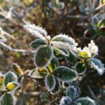 Erster-Frost-Morgen-22-11-2020-012