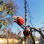 Erster-Frost-Morgen-22-11-2020-014