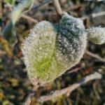 Erster-Frost-Morgen-22-11-2020-021