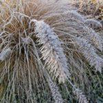 Erster-Frost-Morgen-22-11-2020-024
