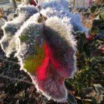 Erster-Frost-Morgen-22-11-2020-025