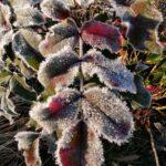 Erster-Frost-Morgen-22-11-2020-026