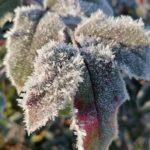 Erster-Frost-Morgen-22-11-2020-027