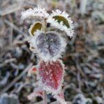 Erster-Frost-Morgen-22-11-2020-029