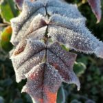 Erster-Frost-Morgen-22-11-2020-030