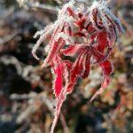 Erster-Frost-Morgen-22-11-2020-031
