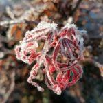 Erster-Frost-Morgen-22-11-2020-032