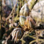 Erster-Frost-Morgen-22-11-2020-037