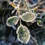 Erster-Frost-Morgen-22-11-2020-038