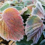 Erster-Frost-Morgen-22-11-2020-039