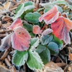 Erster-Frost-Morgen-22-11-2020-040