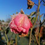 Erster-Frost-Morgen-22-11-2020-041