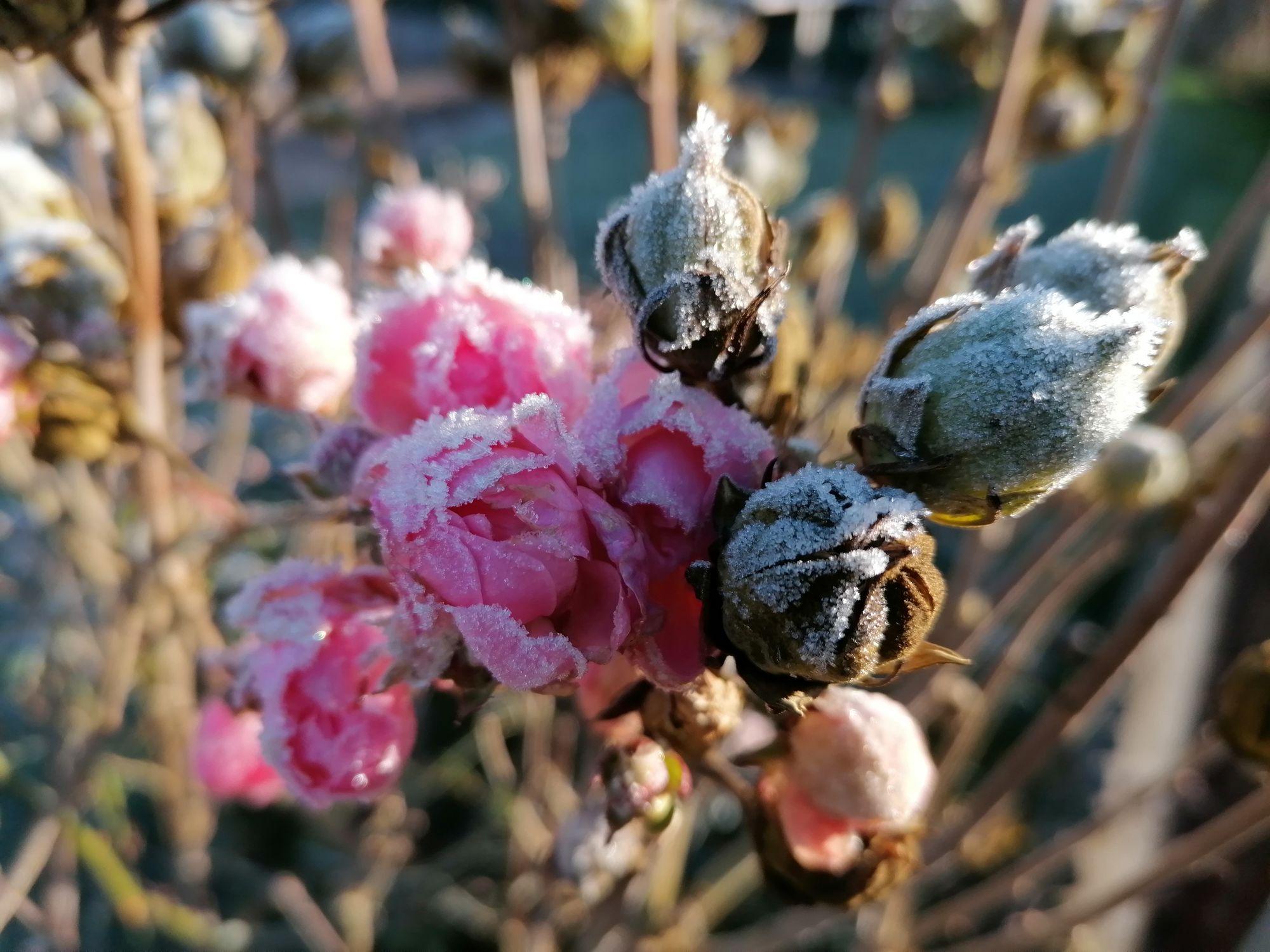 Erster Frost am Sonntag Morgen