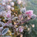 Erster-Frost-Morgen-22-11-2020-044