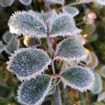 Erster-Frost-Morgen-22-11-2020-045