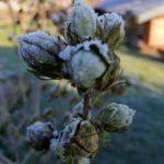 Erster-Frost-Morgen-22-11-2020-046