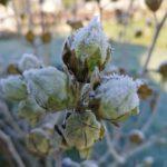 Erster-Frost-Morgen-22-11-2020-047