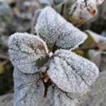 Erster-Frost-Morgen-22-11-2020-048