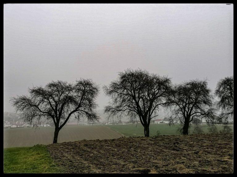 Krenglbach-am-Morgen-17-11-2020-13