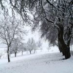 Erster-Schnee-2021-in-Krenglbach-008