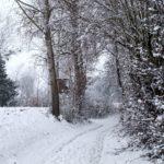 Erster-Schnee-2021-in-Krenglbach-009