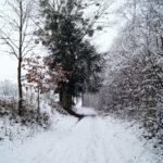 Erster-Schnee-2021-in-Krenglbach-011