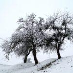 Erster-Schnee-2021-in-Krenglbach-016