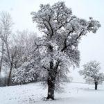 Erster-Schnee-2021-in-Krenglbach-018