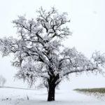 Erster-Schnee-2021-in-Krenglbach-021