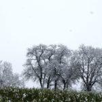 Erster-Schnee-2021-in-Krenglbach-025