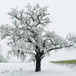 Erster-Schnee-2021-in-Krenglbach-044