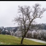 Rauhreif-am-Wundersberg-zu-Neujahr-012