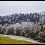 Rauhreif-am-Wundersberg-zu-Neujahr-013