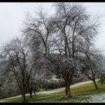 Rauhreif-am-Wundersberg-zu-Neujahr-014