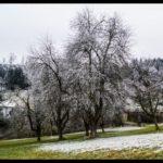Rauhreif-am-Wundersberg-zu-Neujahr-015