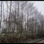 Rauhreif-am-Wundersberg-zu-Neujahr-022